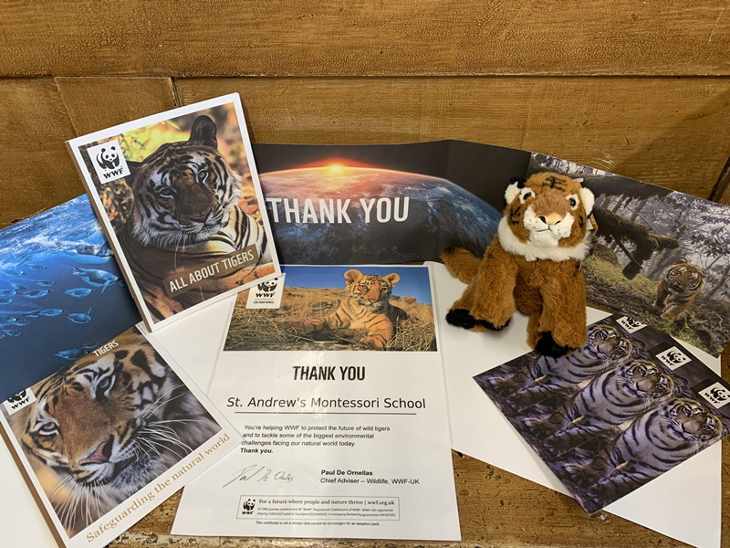 St Andrew's Montessori nursery adopt a tiger
