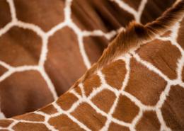 montessori animal print